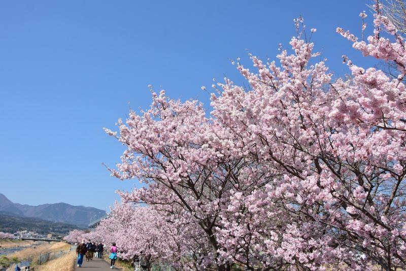 春木径 (8)