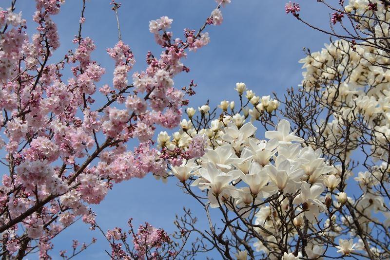 春木径 (9)