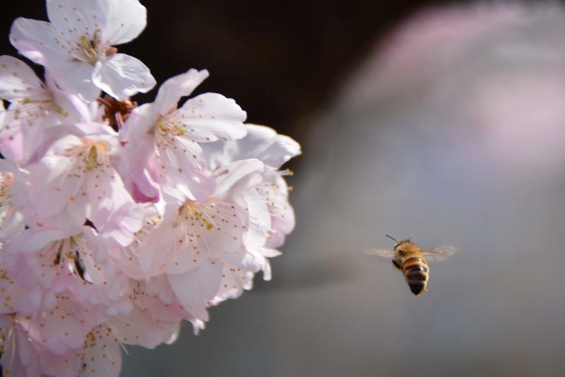 春木径 (7)