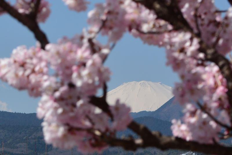 春木径 (4)