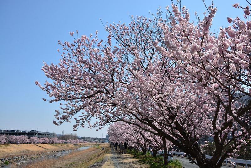 春木径 (1)