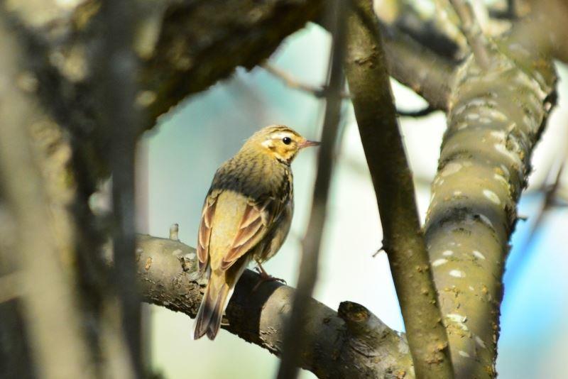 野鳥y (8)