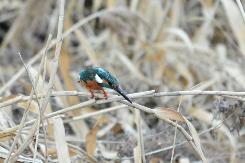 bird~y (2)