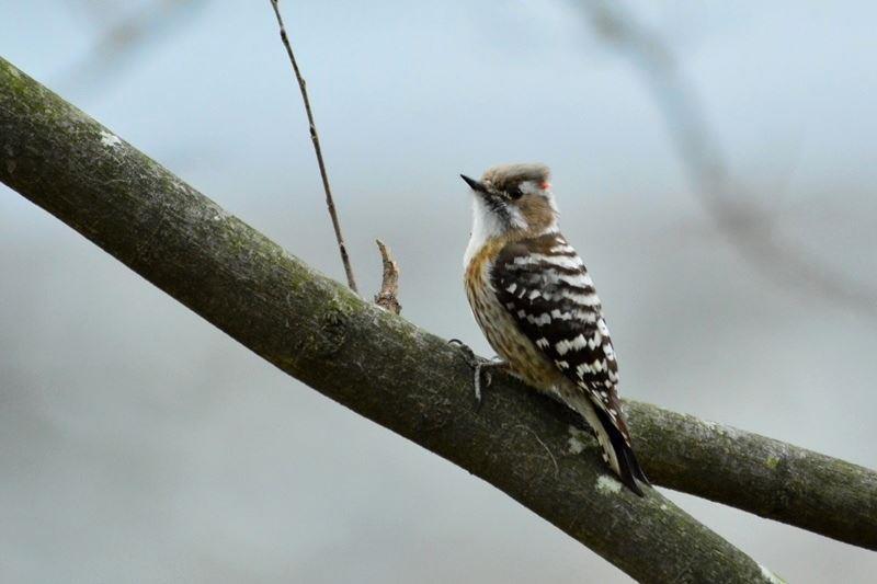 bird~s (3)