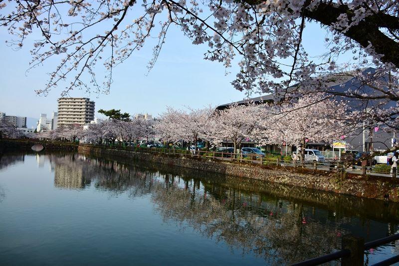 お堀の桜 (8)