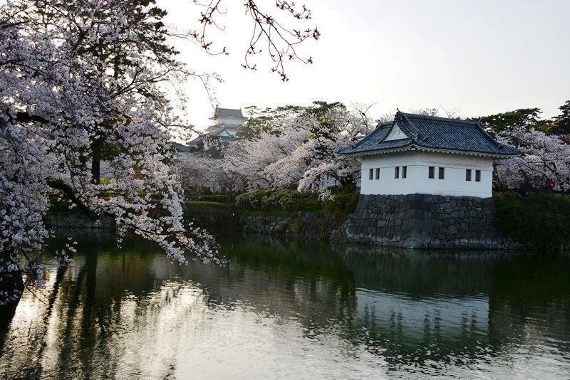 お堀の桜 (4)