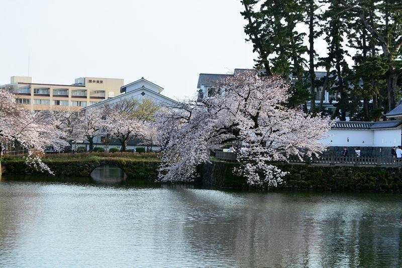 お堀の桜 (10)