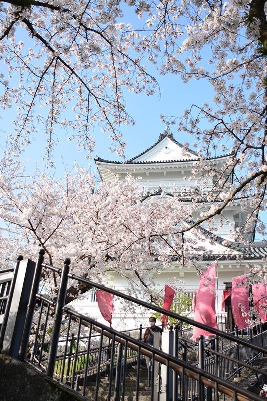 天守閣と桜 (2)
