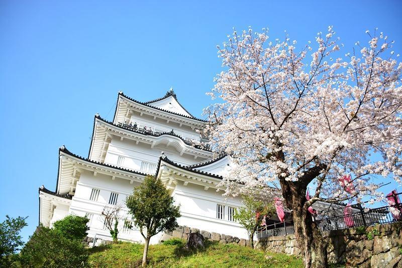 天守閣と桜 (1)