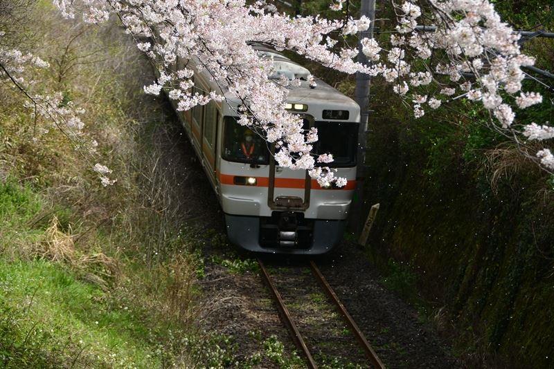 山北の桜 (9)