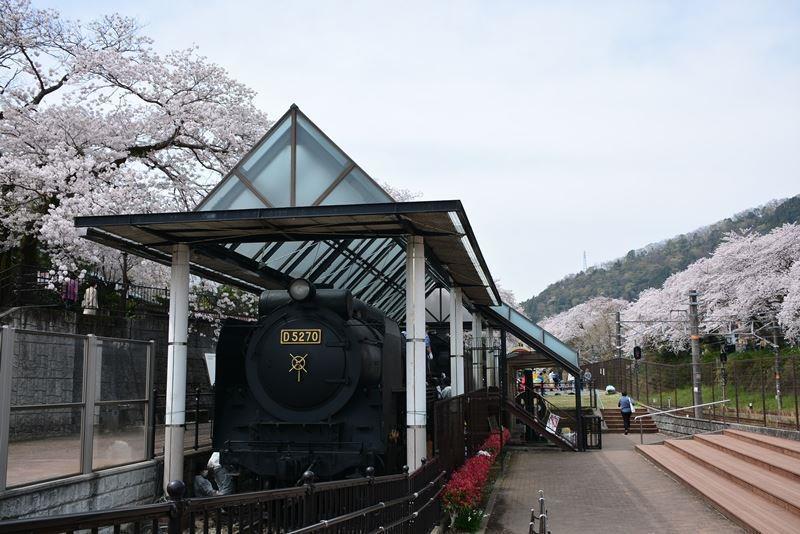山北の桜 (13)