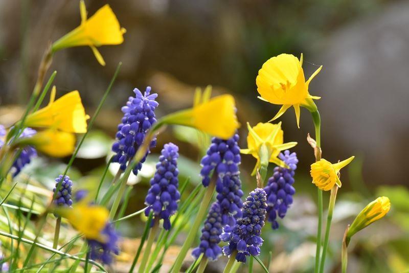 庭の花~c (5)
