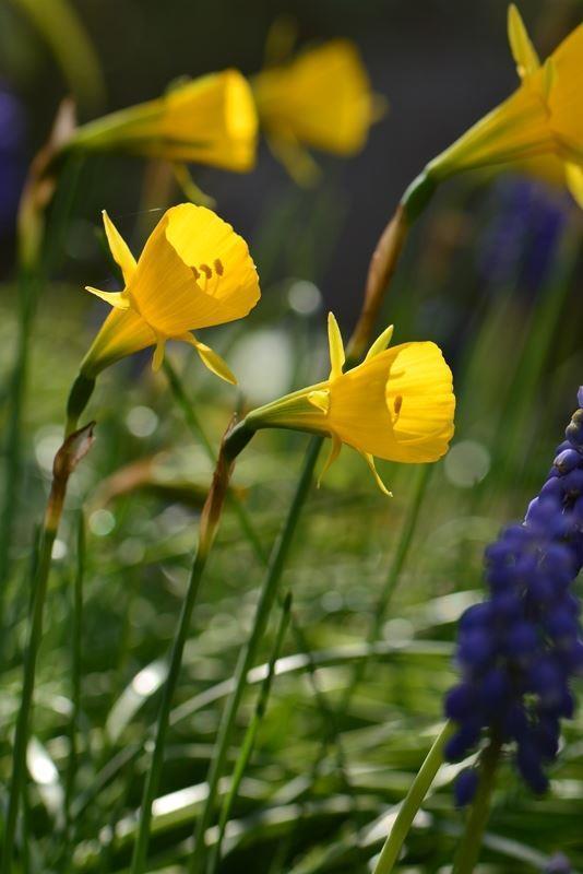 庭の花~c (7)