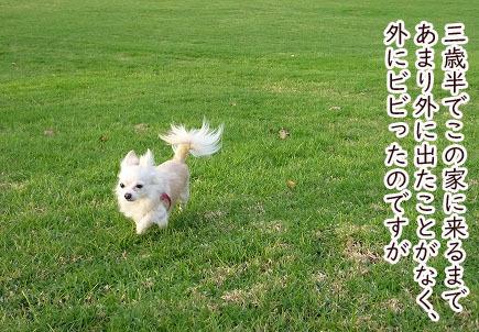 2008035.jpg