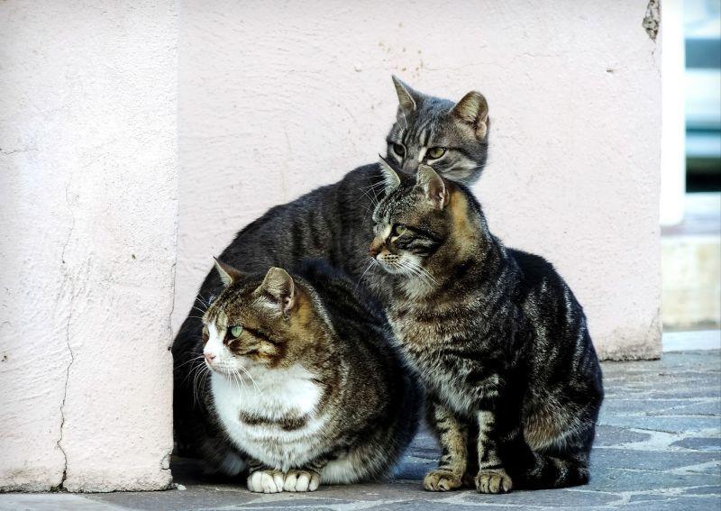 cat-2828505_1920_20201208.jpg