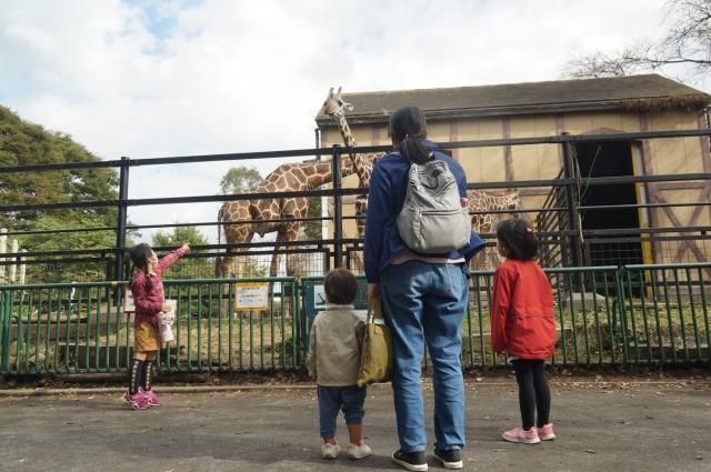羽村動物公園のキリンを見るうちの家族達