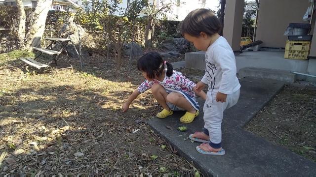 蕗の薹を積む子供たち