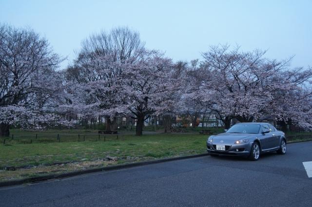 早朝の桜とマツダRX-8 SE3P