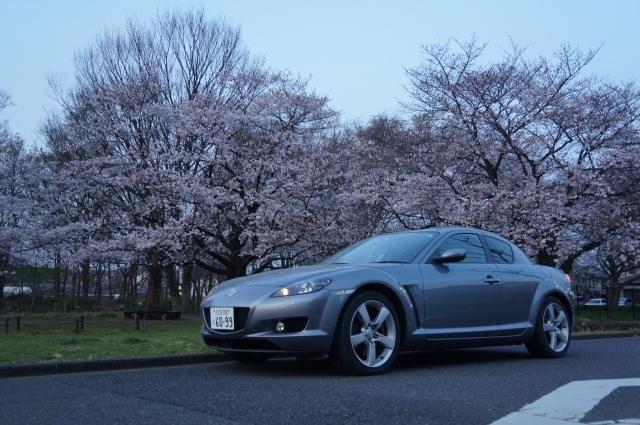 早朝の桜とマツダRX-8 SE3P ロータリーエンジン搭載車