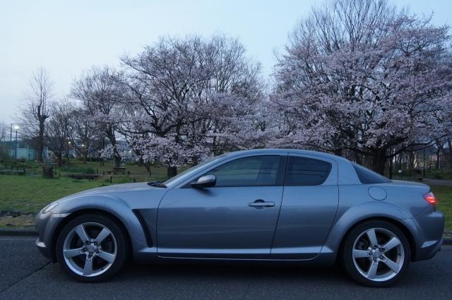 早朝の桜の咲く公園とマツダRX-8 SE3P