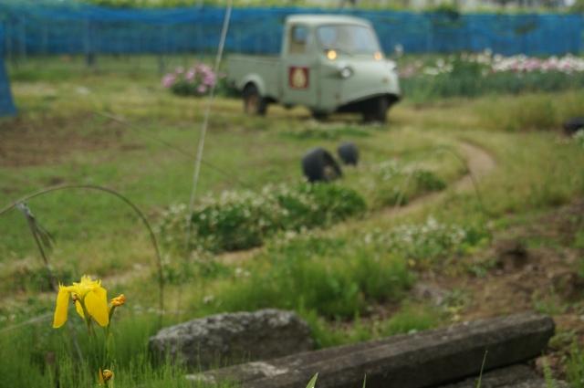 畦道と黄菖蒲とミゼット