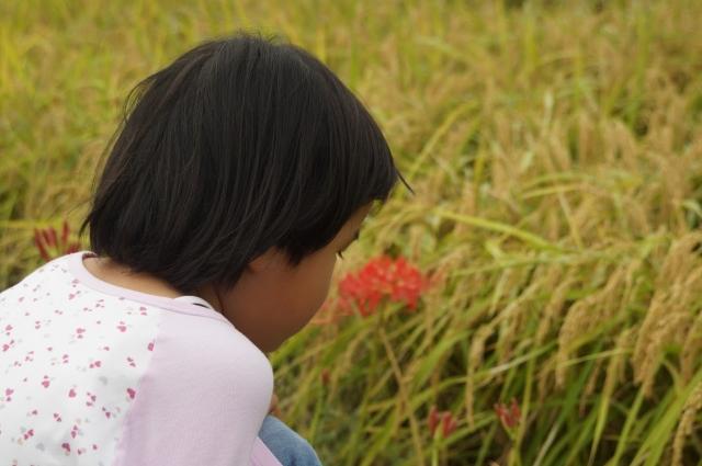 稲を眺める娘
