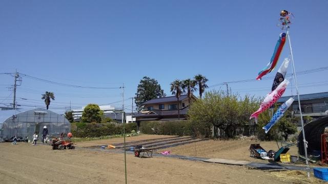 家の隣の畑で