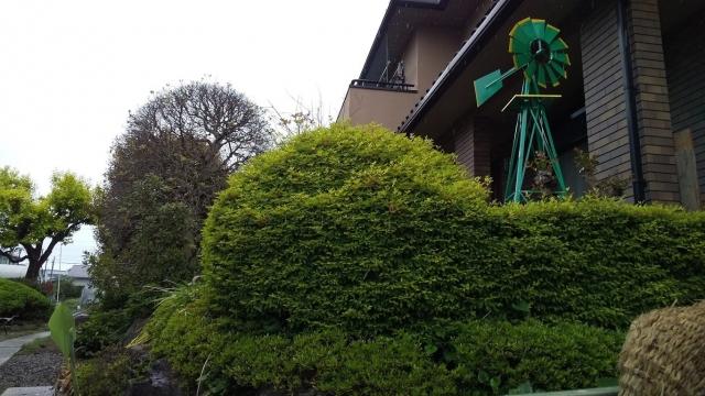 湯船から見える、新緑