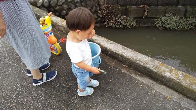 ちょっと散歩、用水に魚を放しにきました