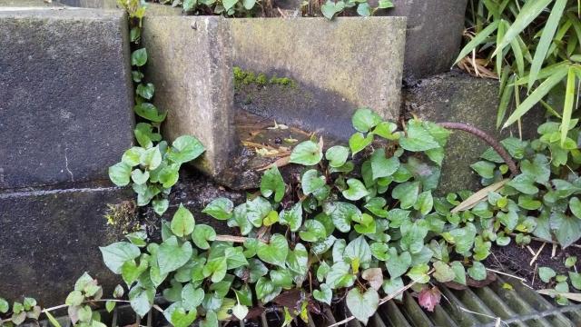 大宮神社の山裾からは湧き水が滴り落ちています
