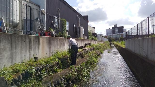 日野の用水組合の川草刈り