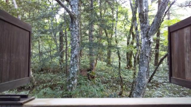 ひらゆの森 一番奥のコテージから見える原生林