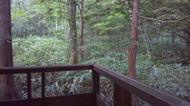 ひらゆの森 一番奥のコテージの客室風呂から見える原生林
