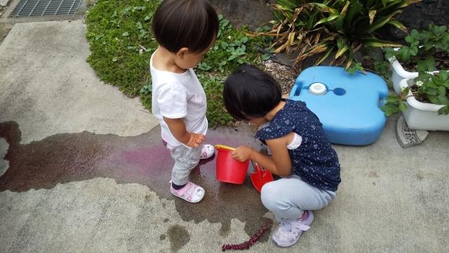 ヤマゴボウの実で色水遊び