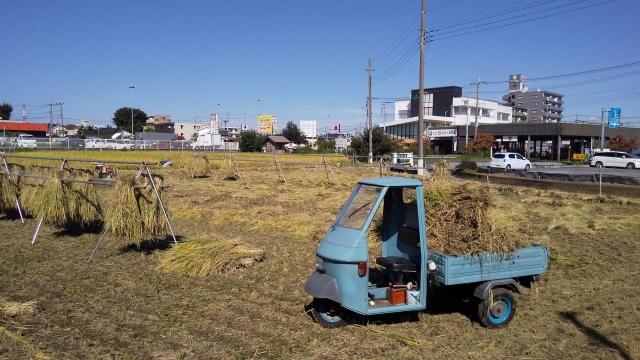 ピアジオに手伝ってもらいながら、稲刈り