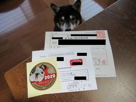 2020狂犬病予防注射3