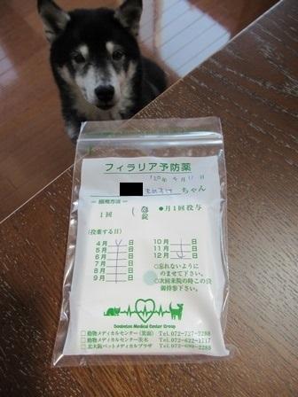 2020狂犬病予防注射11