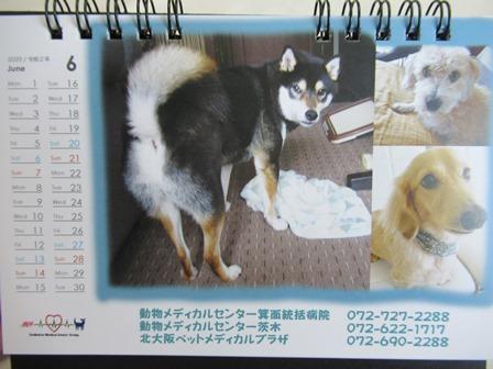 2020狂犬病予防注射20
