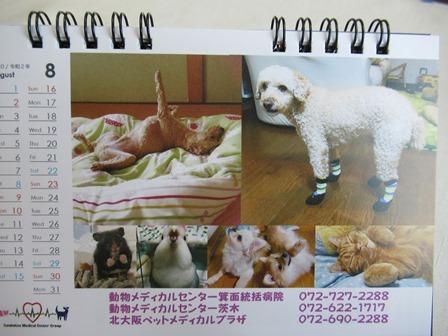 2020狂犬病予防注射21