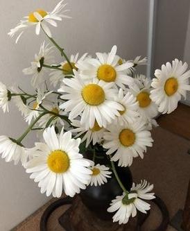 生け花もデージー