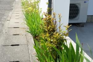 新緑の庭1