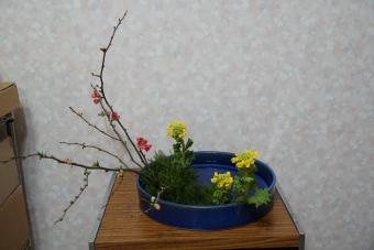 様式 中景 春 木瓜と菜の花