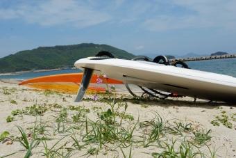 浜の花とウィンドサーフィン