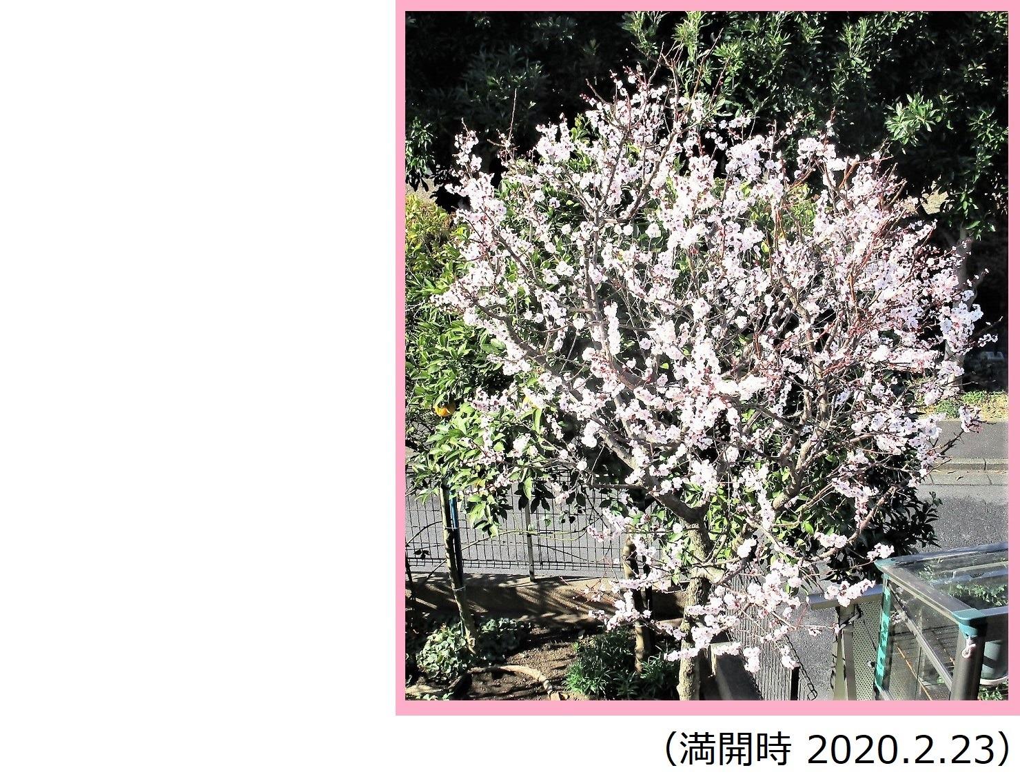 200223ume_kaika