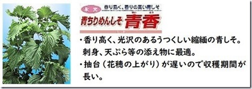 200409aosiso_nae2