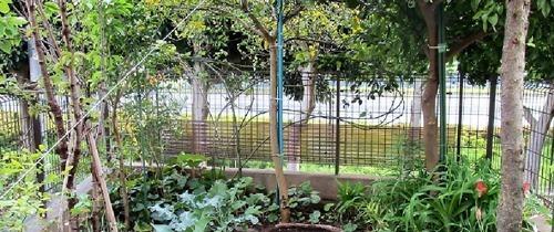 200423blind_garden_ato2