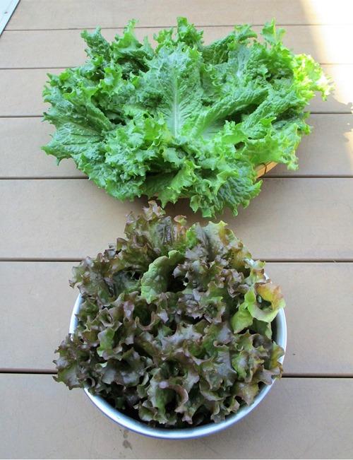 200424leaf_lettuce2