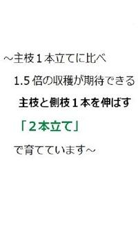 200512nihon-date2