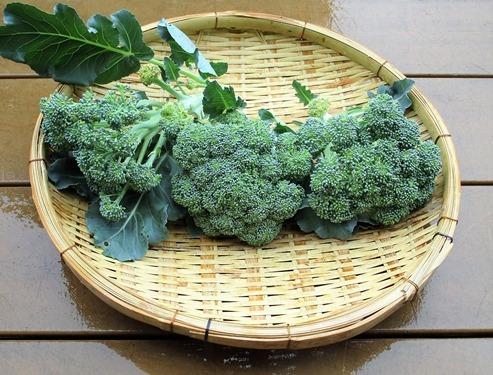 200519broccoli3