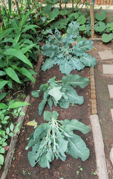 200603broccoli